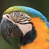 Monte Casino : We went to the Monte Casion Bird Gardens in South Africa in 2011 when we had a few days stopover. http://www.montecasino.co.za/entertainment/family/Bird%20Gardens/Pages/default.aspx